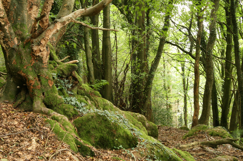 ancient-woodland1