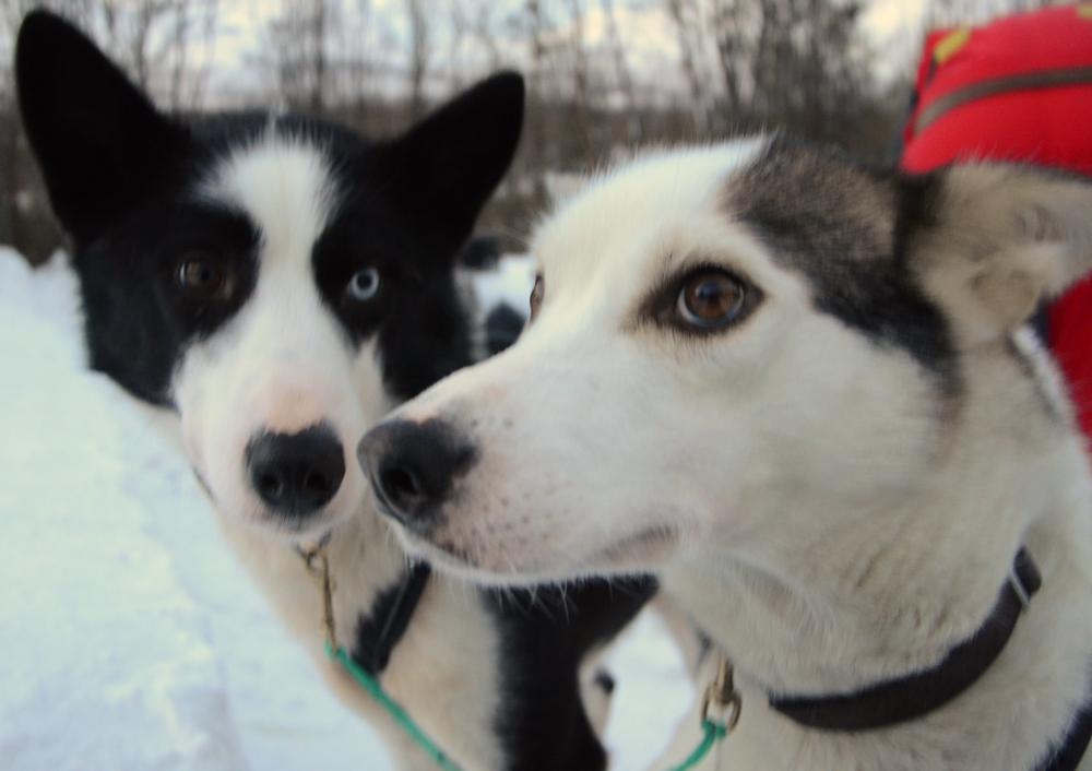 Nouka and Pacha