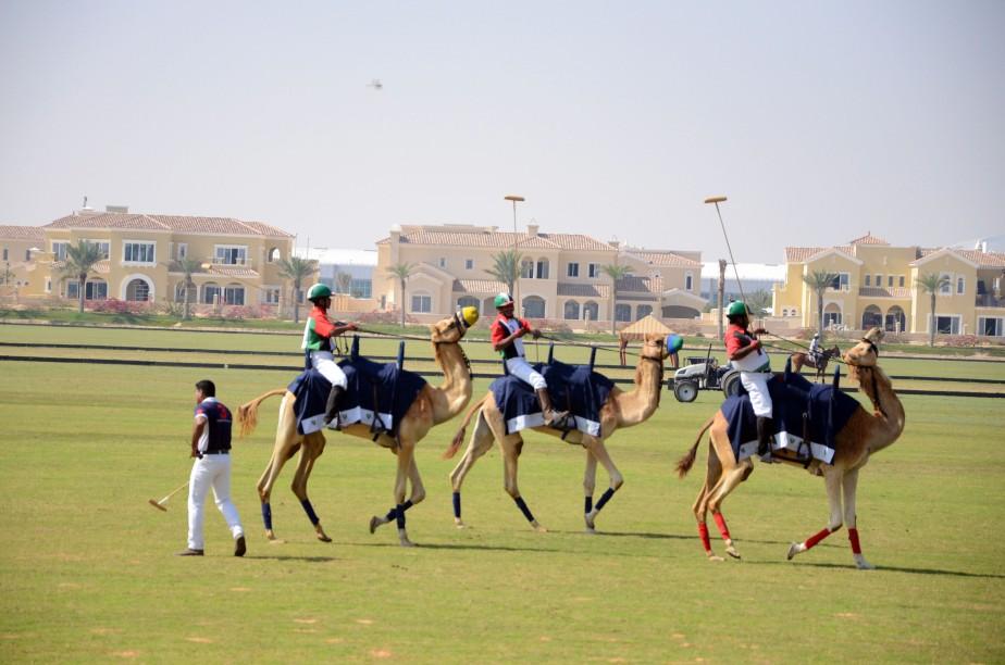 Camel Polo Pros